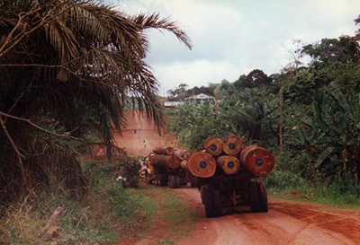 Tree logging in Cameroon
